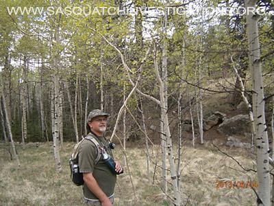Tree Breaks in Co Bigfoot Research Area 1
