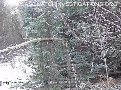 Bigfoot Research In Central Colorado 11-11-12 Picture 2