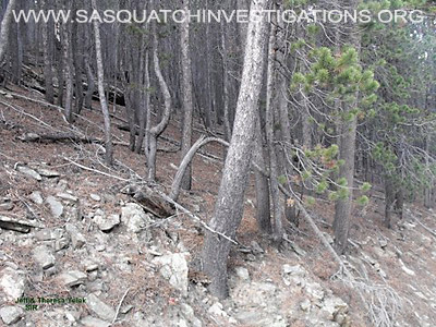 Bigfoot Research In Central Colorado 11-11-12 Picture 4