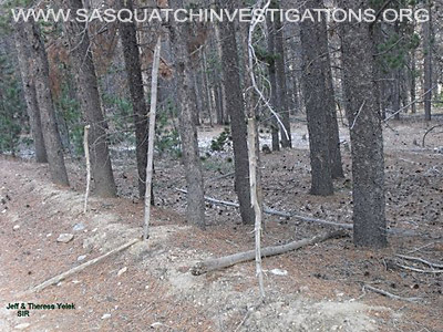 Bigfoot Research In Central Colorado 11-11-12 Picture 5