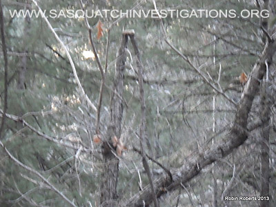 Bigfoot Research In Colorado 01-21-13 by Robin Roberts 3