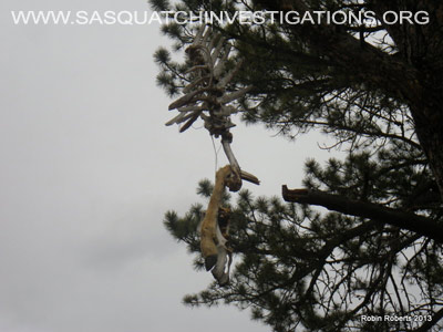 Sasquatch Research In Colorado Field Report 03-25-13 7