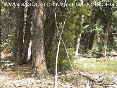 Bigfoot Research Field Report 05-03-13 Picture 3