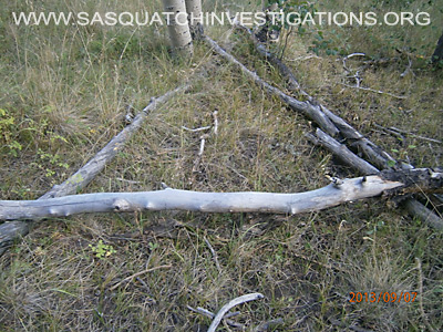 Bigfoot Triangle Tree Structures in Colorado 12-23-13