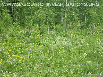 Colorado Bigfoot Research Field Report Picture 1