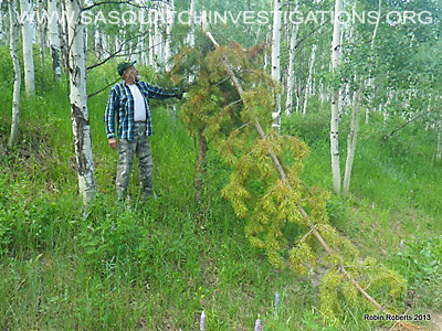 Colorado Bigfoot Research Field Report Picture 2