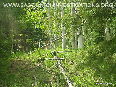 Colorado Bigfoot Research Field Report Picture 4