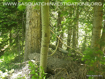 Colorado Bigfoot Research Field Report Picture 7