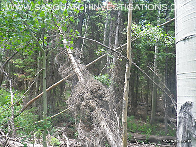 Colorado Bigfoot Research Field Report Picture 8