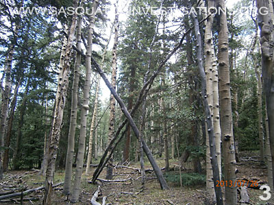 Bigfoot Tree Structures In Colorado 080113 3