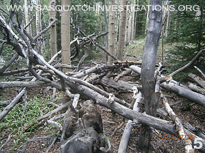 Bigfoot Tree Structures In Colorado 080113 5