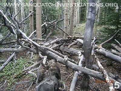 Bigfoot Tree Structures In Colorado 080113 5