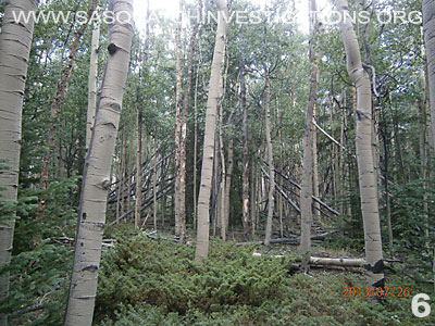 Bigfoot Tree Structures In Colorado 080113 6