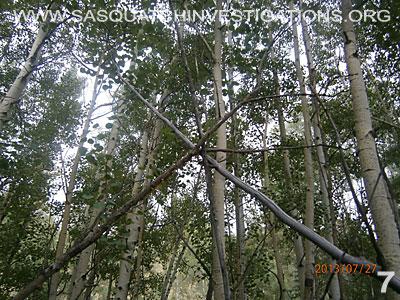 Bigfoot Tree Structures In Colorado 080113 7