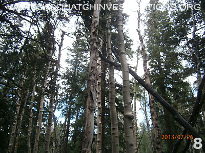 Bigfoot Tree Structures In Colorado 080113 8