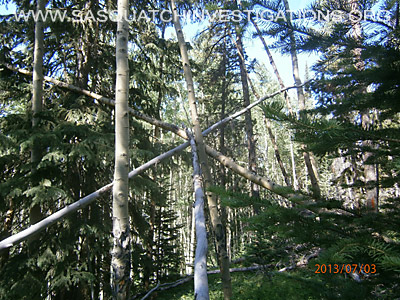 Bigfoot Tree Structures In Colorado 2
