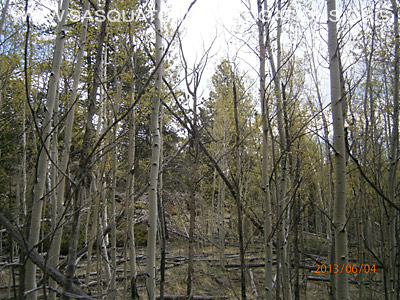 Bigfoot Tree Structures In Colorado 3