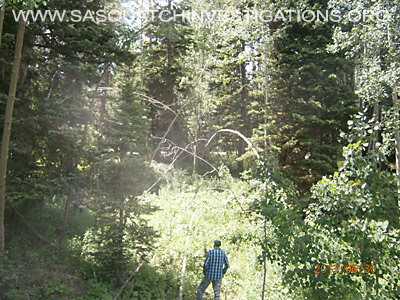 Bigfoot Tree Structures In Colorado 4
