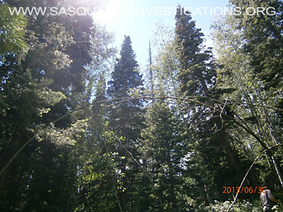 Bigfoot Tree Structures In Colorado 5