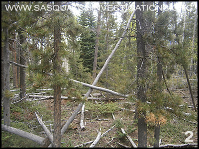 Bigfoot Tree Structures in Colorado 06-24-14 2
