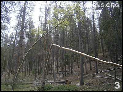 Bigfoot Tree Structures in Colorado 06-24-14 3