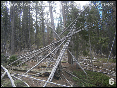 Bigfoot Tree Structures in Colorado 06-24-14 6