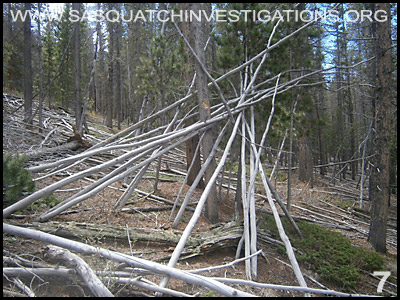 Bigfoot Tree Structures in Colorado 06-24-14 7