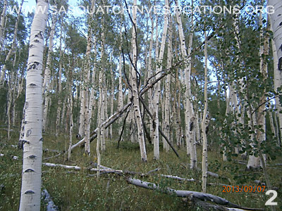 Bigfoot tree structure in Colorado 09/4/13 2
