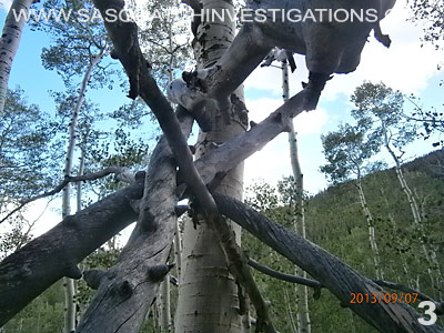 Bigfoot tree structure in Colorado 09/4/13 3