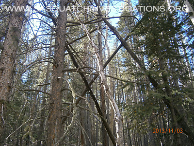 Bigfoot Tree Structures In Colorado 11-16-131