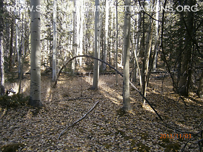 Bigfoot Tree Structures In Colorado 11-16-132