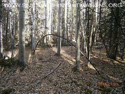 Bigfoot Tree Structures In Colorado 11-16-132