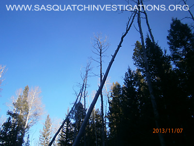 Bigfoot Tree Structures In Colorado 11-16-13 3 1