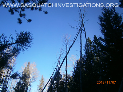 Bigfoot Tree Structures In Colorado 11-16-13 3 2