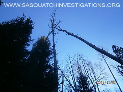 Bigfoot Tree Structures In Colorado 11-16-13 3 3