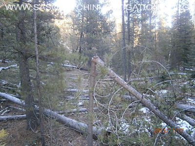 Bigfoot Tree Structures In Colorado 11-16-13 3 5