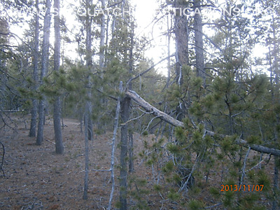 Bigfoot Tree Structures In Colorado 11-16-13 3 6