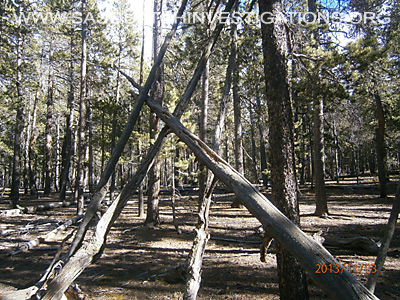 Bigfoot Tree Structures In Colorado 11-16-135
