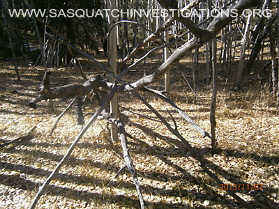 Bigfoot Trees Structures 11-16-13 2 1