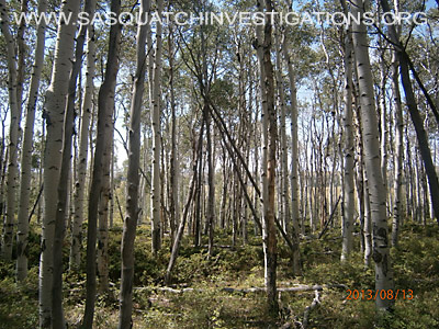 Colorado Squatch Tree Structures 081613 4