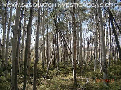 Colorado Squatch Tree Structures 081613 4