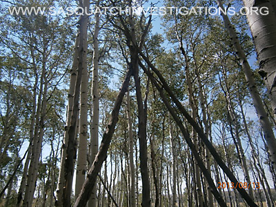 Colorado Squatch Tree Structures 081613 5