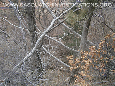 Bigfoot Tree Structures In Colorado 04-01-14 2