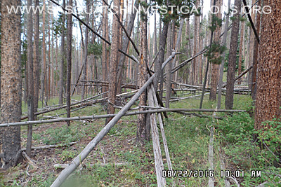 Bigfoot Tree Structure 08-24-16 4