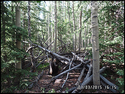 Bigfoot Tree Structures 2136