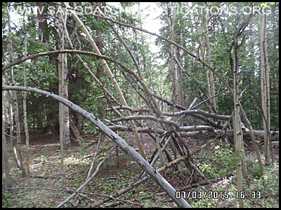 Bigfoot Tree Structures 2148