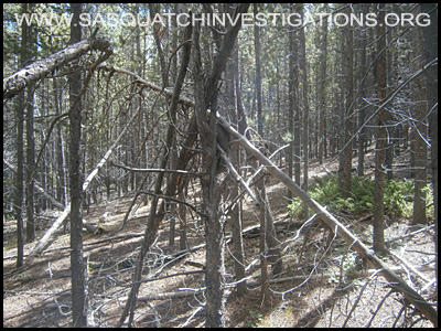 Bigfoot Tree Structure 09-09-14 Colorado
