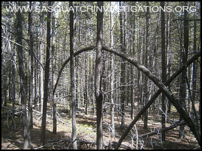 Bigfoot Tree Structure 09-09-14 Colorado 2