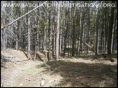 Bigfoot Tree Structure 09-09-14 Colorado 5