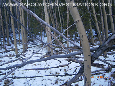 Bigfoot tree structures in Colorado 10-24-13 2